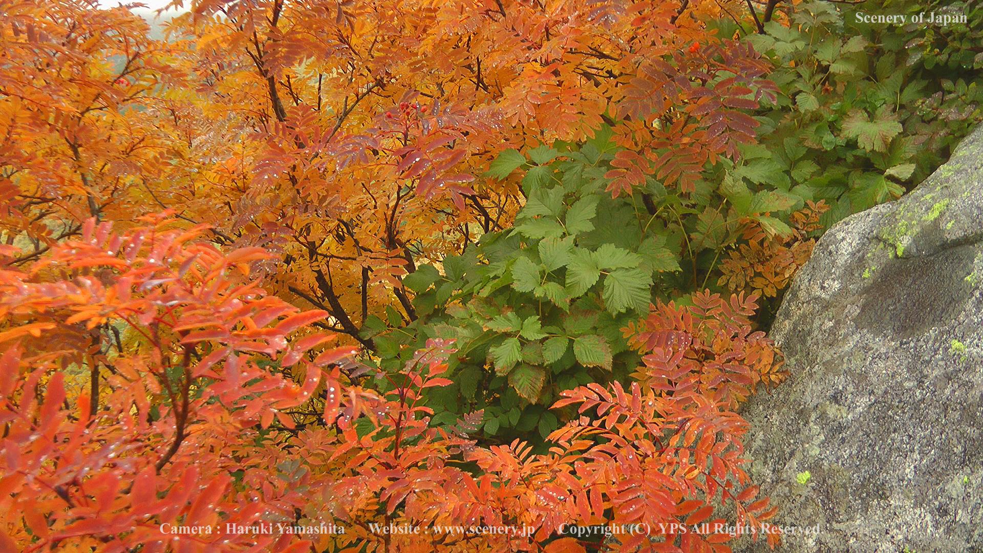 秋の壁紙 画像 無料ダウンロード Scenery Of Japan