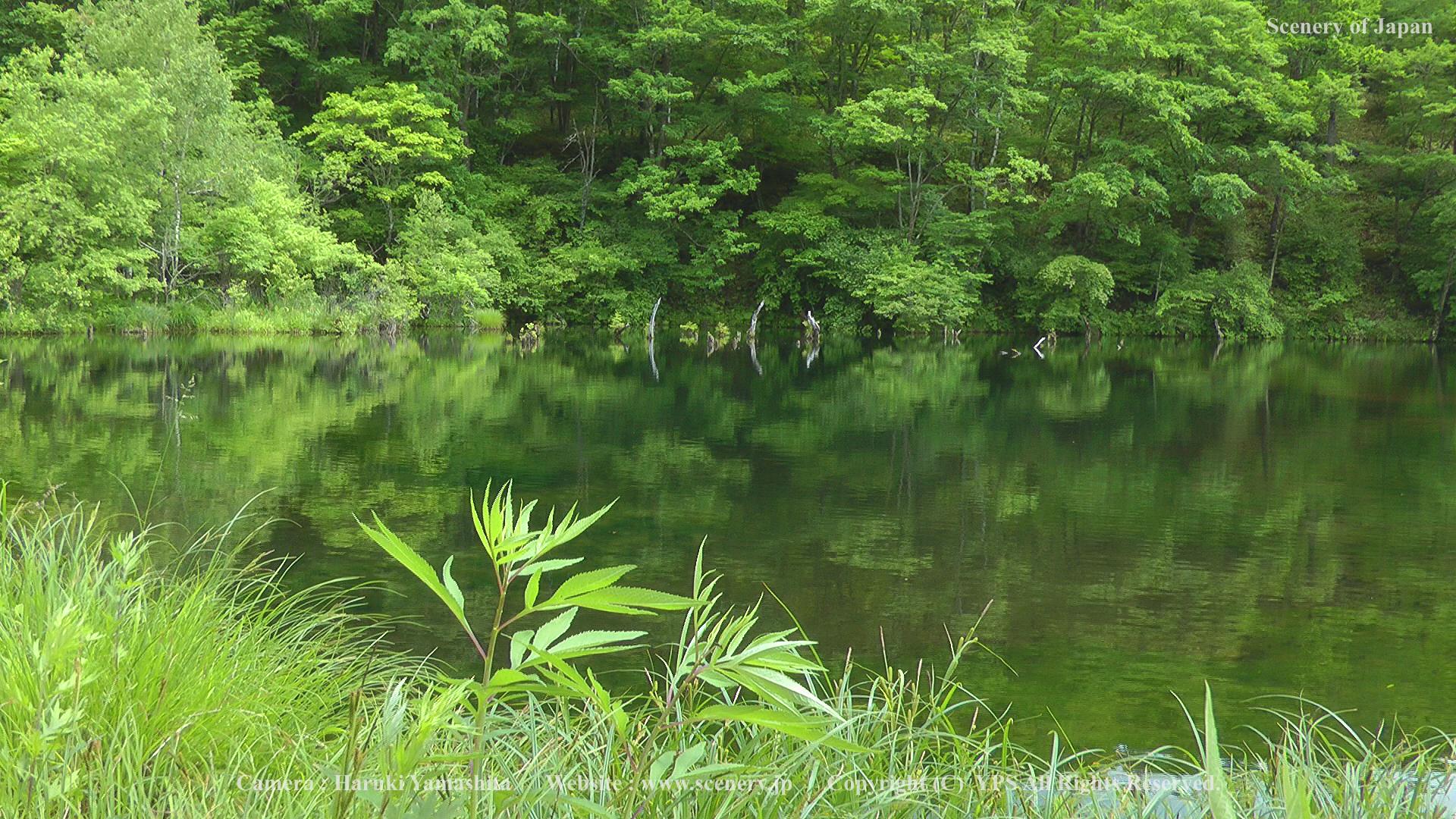 風景写真の無料壁紙 - 夏の画像 ...